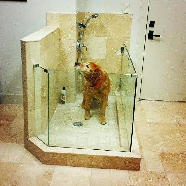 Собачий душ